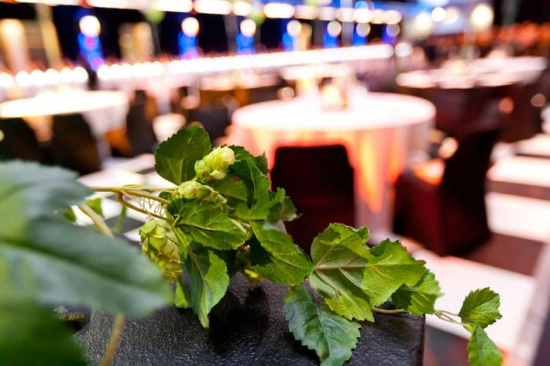 photo d'une bine de houblon artificiel à SIBA Beer X